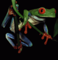 Test - Frog Picture (PD)